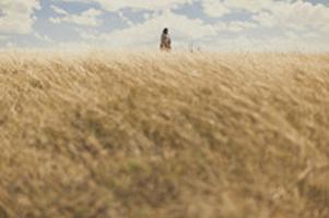 Golden harvest field